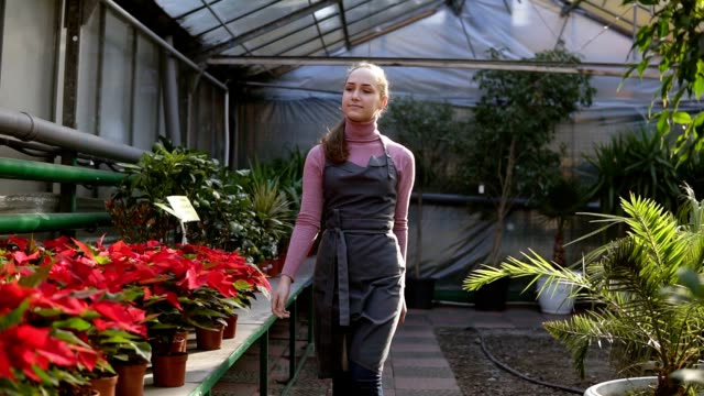 Young female florist with ponytail in apron walking among rows of flowers in flower shop or market. Flowerpot with red poinsettia on the shelves video