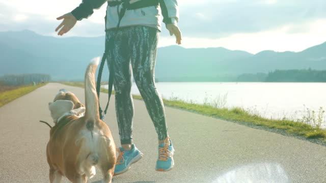junge frau mit ihrem beagle hund während eines morgendlichen joggen herumalbern - hundesitter stock-videos und b-roll-filmmaterial
