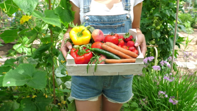 Young female gardner  with crate full of vegetables Organic vegetables healthy nutrition concept in garden homegrown produce stock videos & royalty-free footage