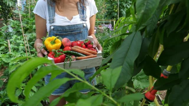 vídeos de stock e filmes b-roll de young female gardner  with crate full of vegetables - engradado