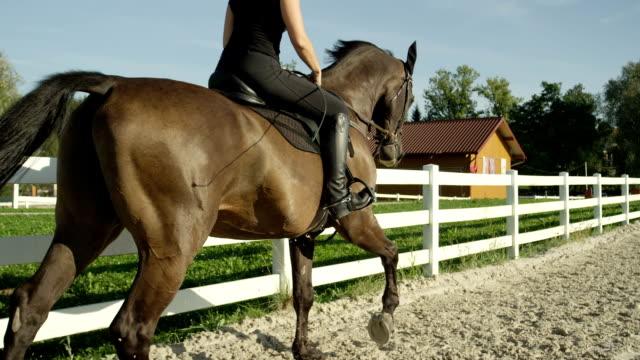 vidéos et rushes de close up: formation féminine jeune cheval grand musclé étalon brun foncé - dressage équestre