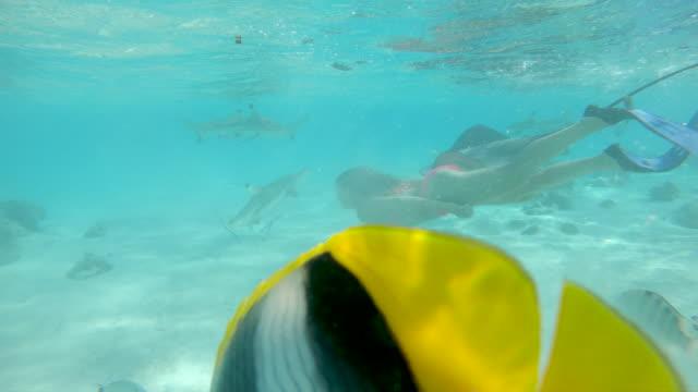 vídeos de stock e filmes b-roll de underwater young female traveler dives in the emerald ocean with blacktip sharks - uge