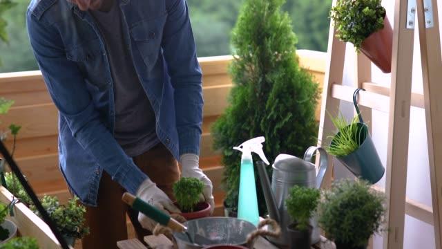 young gardener - urban gardening stock-videos und b-roll-filmmaterial
