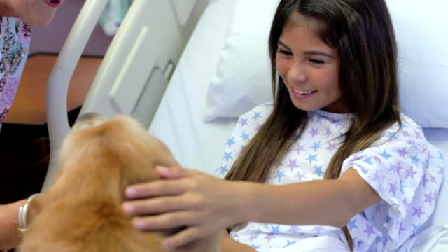 Young Girl Being Visited In Hospital By Therapy Dog video