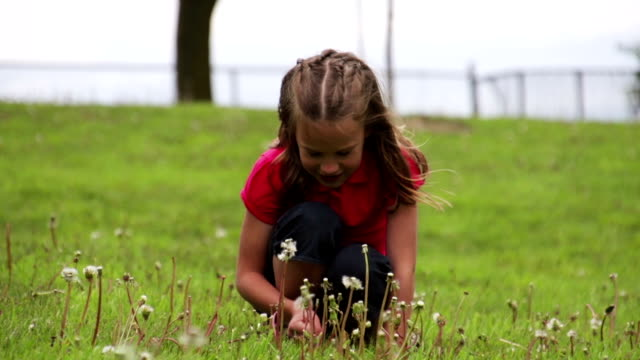 Young girl crouching in the grass blowing dandelion seeds video