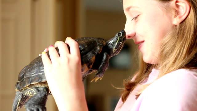 Young Girl Holding Turtle An 11 year old girl holding her red-eared slider up to her face and smiling. reptile stock videos & royalty-free footage