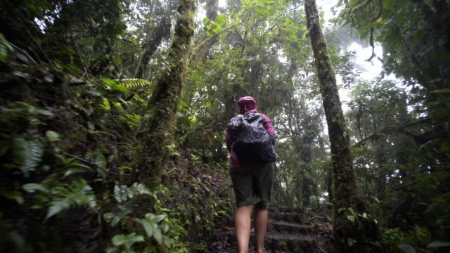 vidéos et rushes de jeune fille dans la jungle - randonnée équestre