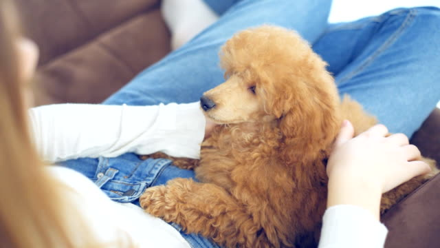 Young girl is resting with a dog on the armchair at home . video