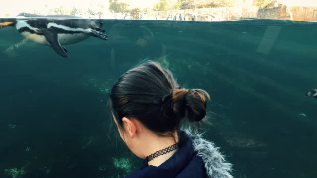 Young girl playing with a tame penguin in a large tank
