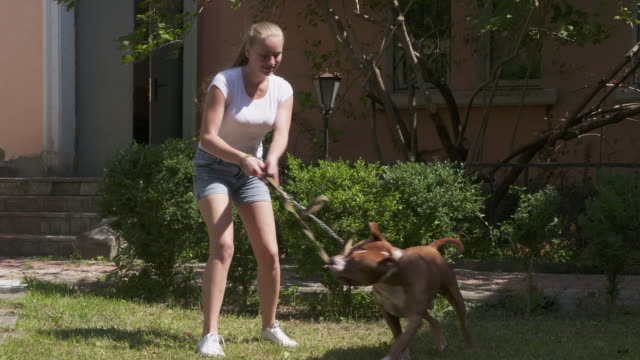 Young girl playing with her american staffordshire terrier dog video