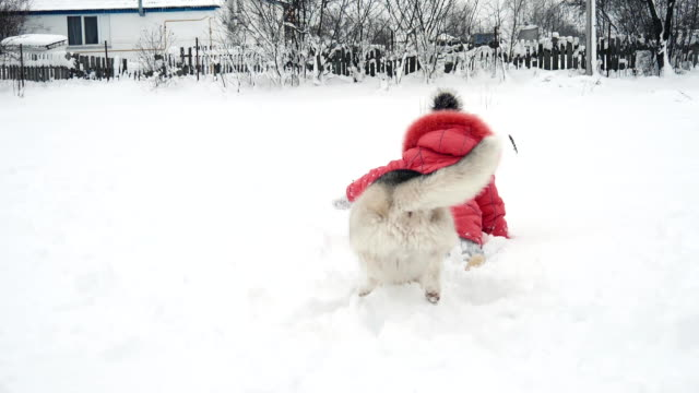 young girl playing with siberian husky malamute dog on the snow outdoors in slow motion - malamute video stock e b–roll