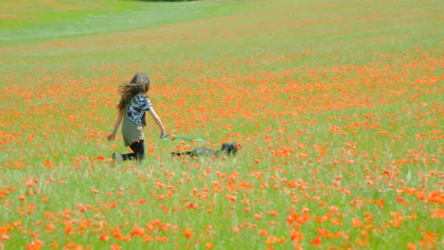 Ein junges Mädchen läuft mit ihrem Haustier Spaniel durch eine Mohnwiese. – Video
