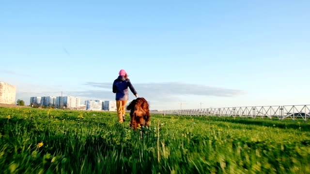 Young girl runs away from a dog in the park at sunset. Pet Irish Setter romantically runs with a woman, slow motion Young girl runs away from a dog in the park at sunset. Pet Irish Setter romantically runs with a woman, slow motion. irish setter stock videos & royalty-free footage