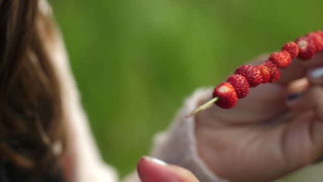young girl threading wild strawberries smultron on grass straw
