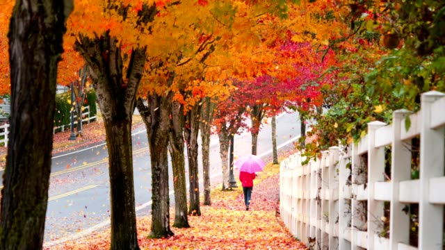 Young girl walking on sidewalk with umbrella while autumn leaves falling video
