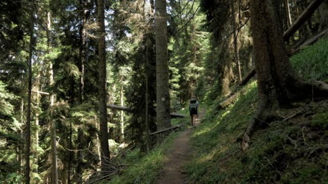 ung flicka promenader i skogen bergen med bakpack - georgien nationalpark - liten skog bildbanksvideor och videomaterial från bakom kulisserna