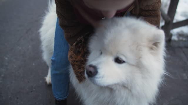 vídeos de stock e filmes b-roll de young girl with samoyed dog outdoors - samoiedo