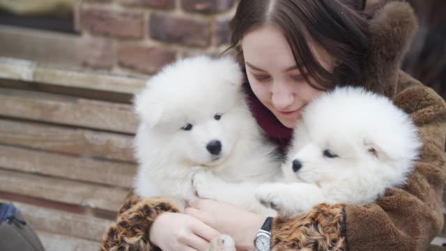 vídeos de stock e filmes b-roll de young girl with two samoyed puppies outdoors - samoiedo