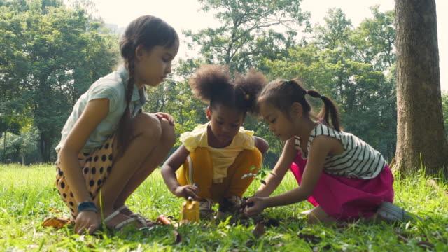 Young girls Children planting sapling on soil