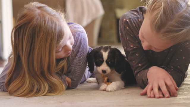 Young girls laying on a living room floor a they watch as their adorable puppy. video