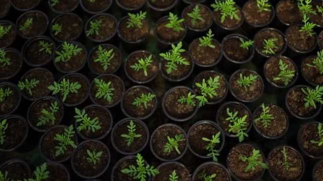 Young green plant seedlings