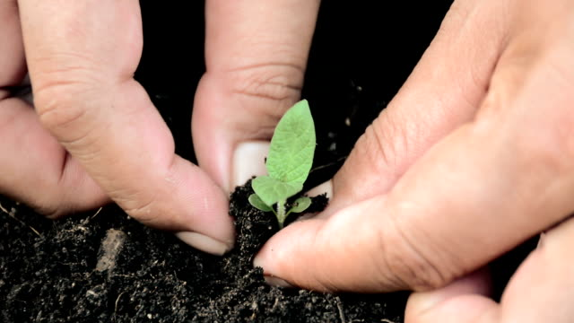 young green planting hands holding  a young green plant morality stock videos & royalty-free footage