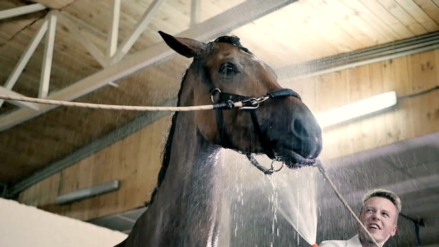 Young guy cleaning the horse in the stall video
