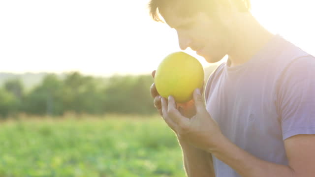 Young handsome farmer inspecting melon crop for readiness for harvesting.