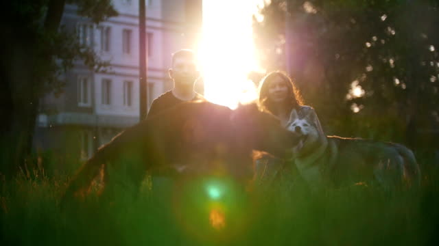 Young happy couple playing with their dogs at summer sunset Young happy couple playing with their dogs at summer sunset, slow motion irish setter stock videos & royalty-free footage