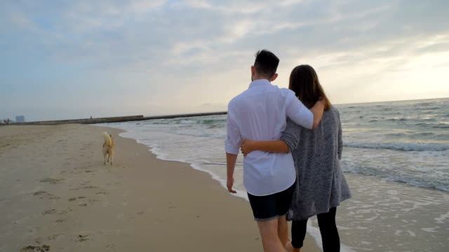 young happy couple walking on beach with dog - cane husky video stock e b–roll