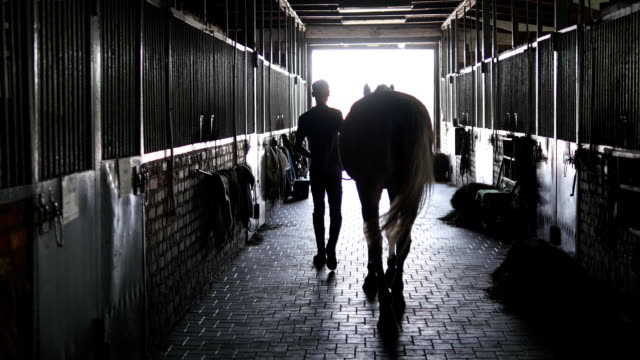 Young jockey is walking with a horse out of a stable. Man leading horse out of stable. Rear back view. Steadicam shot