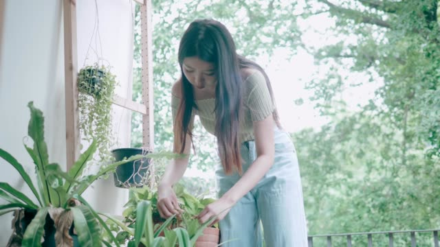 Young lady planting at her home balcony-stock VDO video