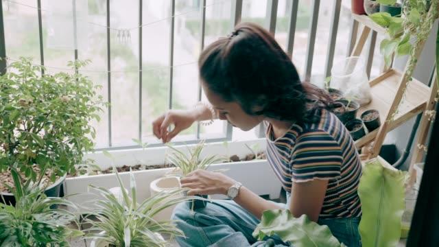 Young lady planting on condominium balcony-stock VDO video