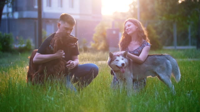 Young lovely couple caress their dogs outdoors recreation at sunset Young lovely couple caress their dogs outdoors recreation at sunset, slow motion irish setter stock videos & royalty-free footage