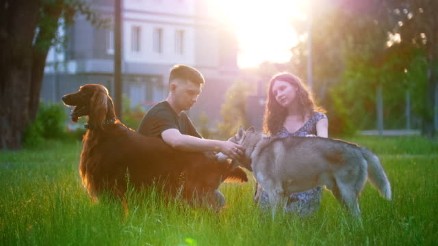 Young loving couple with their dogs having a rest outdoors on the grass at sunset Young loving couple with their dogs having a rest outdoors on the grass at sunset, slow motion irish setter stock videos & royalty-free footage