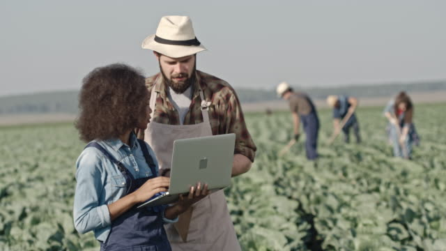 Young Male and Female Farmers with Laptop on Field video