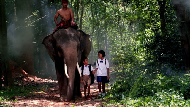 Young man and student walking with cute elephant.