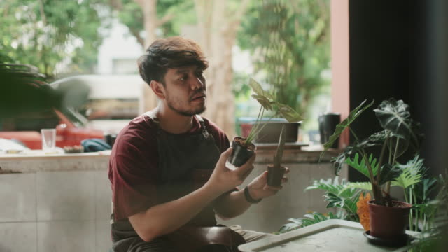 Young man arranging the plants at home