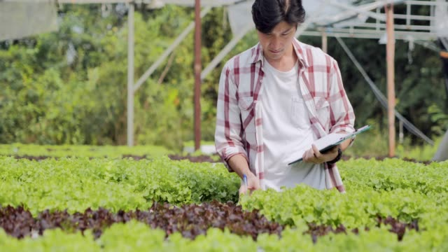 若い男が品質水耕栽培有機野菜の農場をチェックします。若い男が品質水耕栽培有機野菜の農場をチェックします。ガーデニング - ガーデニング点の映像素材/bロール