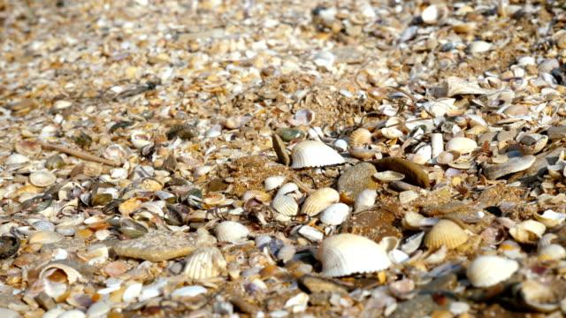 vídeos de stock e filmes b-roll de a young man collects shells on the sea beach. - bugio