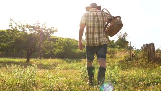 vídeos de stock e filmes b-roll de young man farmer walking carrying basket full of apricots in vegetable garden at sunset. - picking fruit