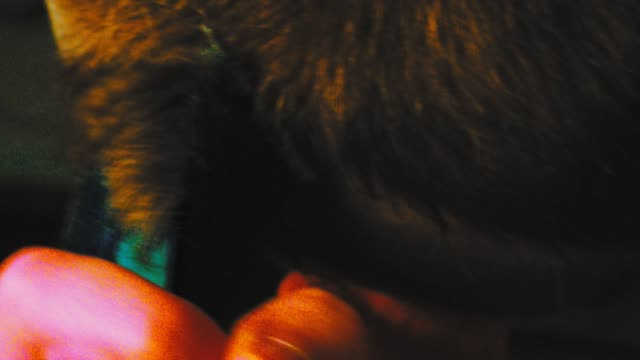 young man head shaving video