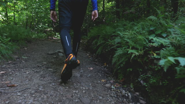 Young Man Hiking in the Forest in Summer A young man is hiking in the forest in summer at Parc National du Mont-Tremblant in Quebec, Canada. It is a beautiful sunny day. This video is in slow motion. footpath stock videos & royalty-free footage