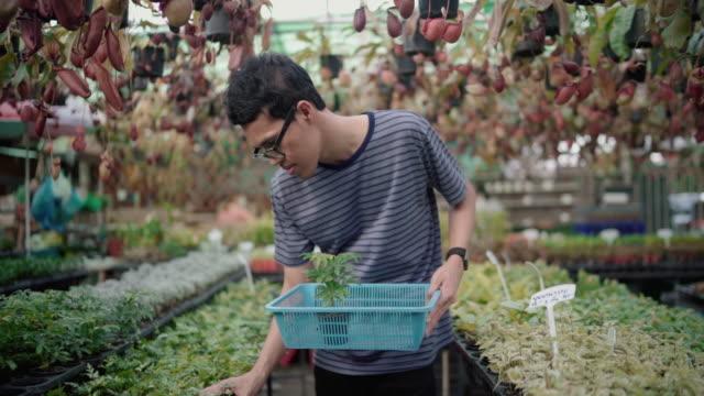 ัyoung man in doing tree business Using wooden basket Harvest In order to be sold to the market