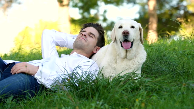 young man lying in the meadow with his labrador dog video