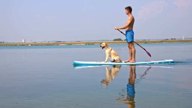 Young man paddleboarding with his dog video