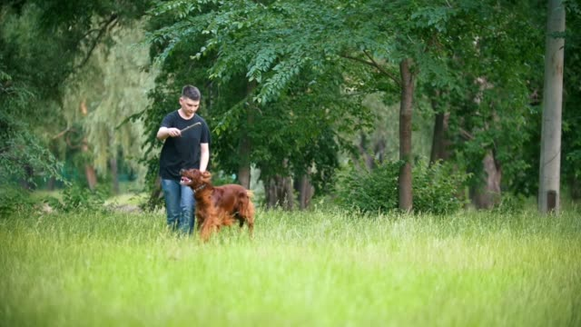 Young man plays with his pet dog - irish setter. Male give him branch of the tree Young man plays with his pet dog - irish setter. Male give him branch of the tree, slow motion irish setter stock videos & royalty-free footage