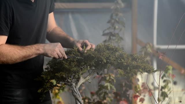 Young man pruning bonsai tree