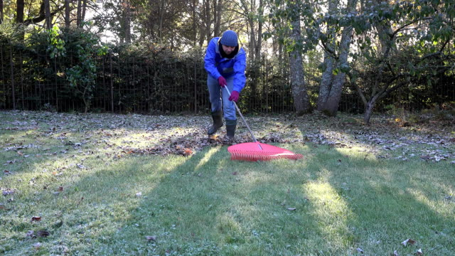 young man rake leaves with red rake in searching autumn. FullHD video