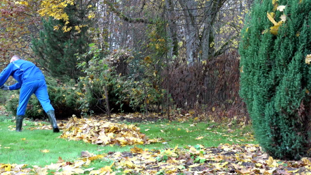 young man rake maple leaves in pile in garden. Season work. FullHD video